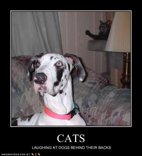 uh43048,1289243546,funny-dog-pictures-cats-laughing