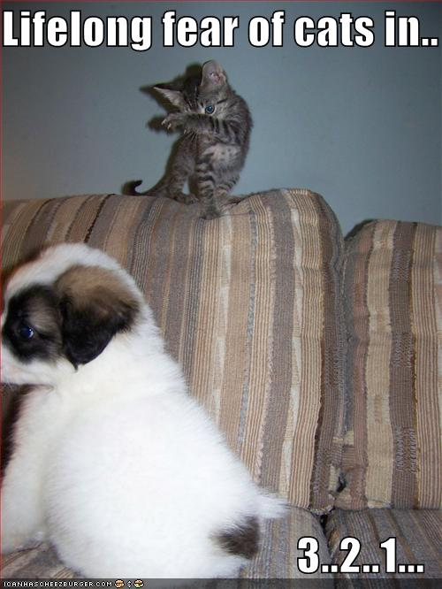 uh43048,1289245069,funny-pictures-puppy-is-about-to-get-a-lifelong-fear-of-cats