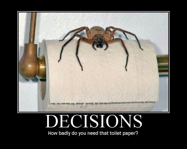 uh43048,1289245456,big-scar-spider-sitting-on-roll-of-toilet-paper
