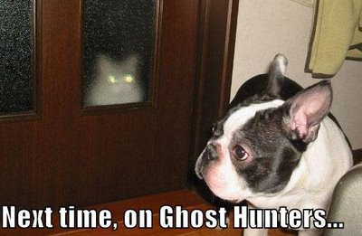 uh43048,1289246612,funny-dog-pictures-ghost-cat-silly