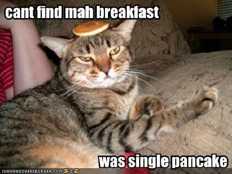 uh43048,1290958299,funny-pictures-cat-lost-breakfast