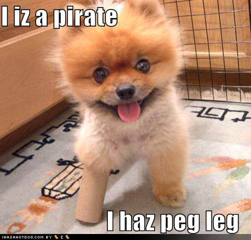 uh43048,1290963855,cute-puppy-pictures-peg-leg-pirate