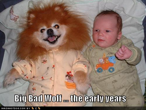 uh43048,1290964219,funny-dog-pictures-big-bad-wolf-early-years