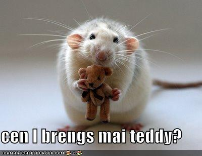 uh43048,1293332870,funny-pictures-mouse-asks-if-he-can-bring-his-teddy