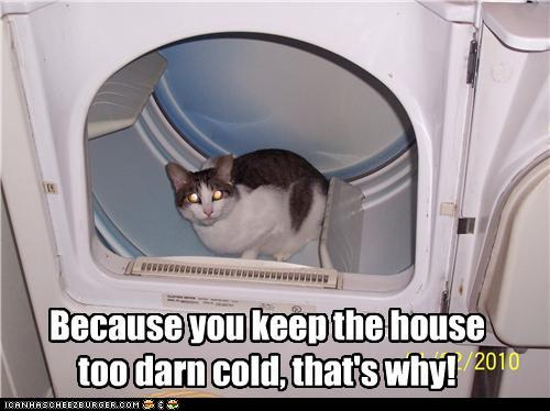 uh43048,1294230290,funny-pictures-cat-is-cold