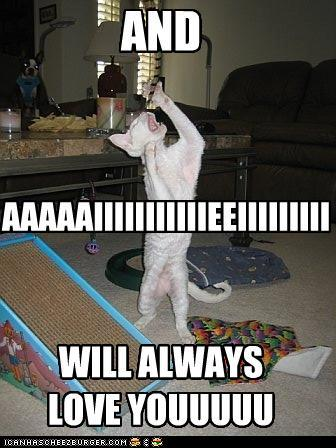 uh43048,1294230322,funny-pictures-whitney-houston-cat