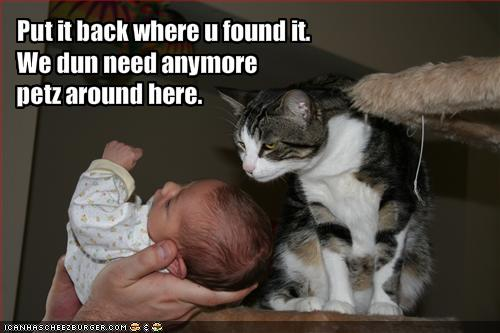 uh43048,1295753280,funny-pictures-cat-does-not-approve-of-baby