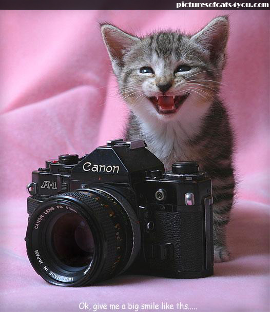 uh43048,1295753782,happy-cats-funny-cats-8