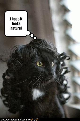 uh59854,1264238584,uh43048,1261489363,funny-pictures-cat-has-a-wig