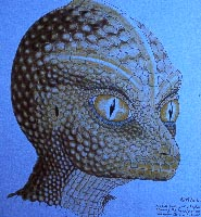 uh60450,1290164489,reptilian draw2
