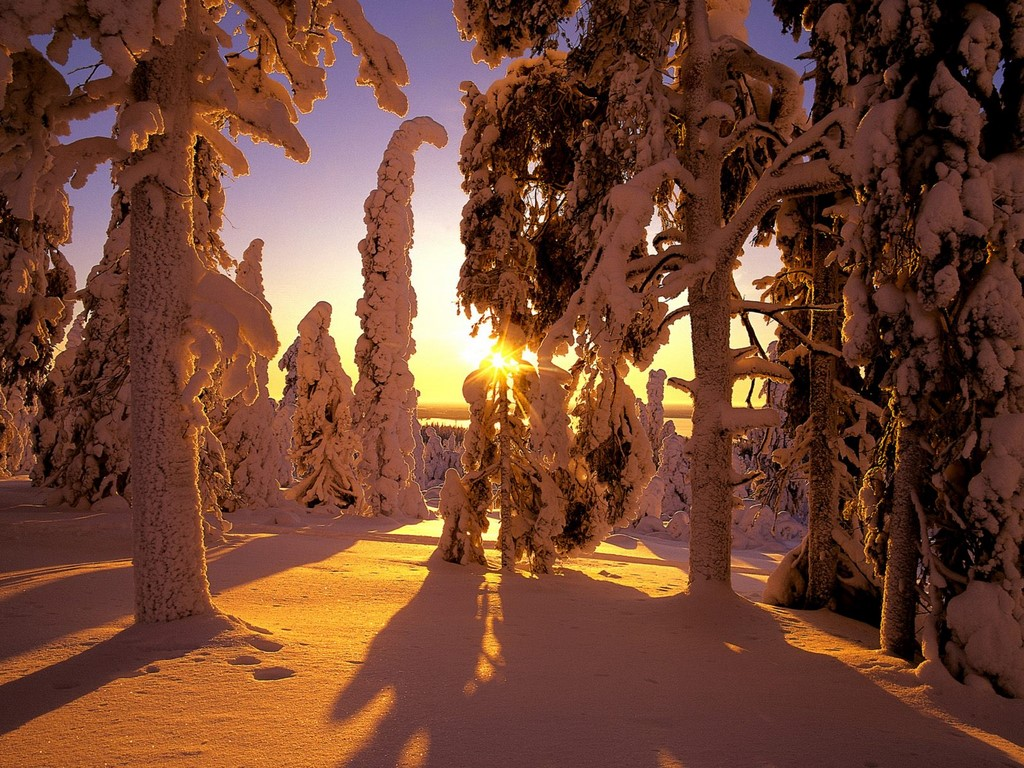 uh68143,1291254945,Snow Covered Forest2C Finland