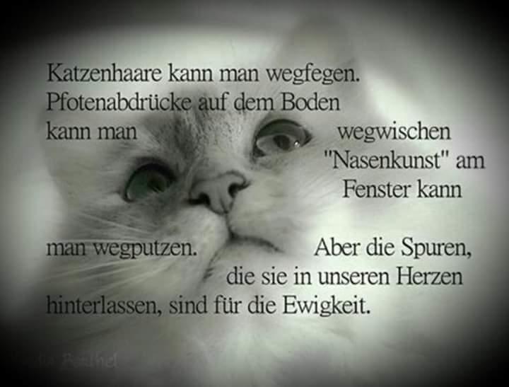 Beileid Katze Gestorben