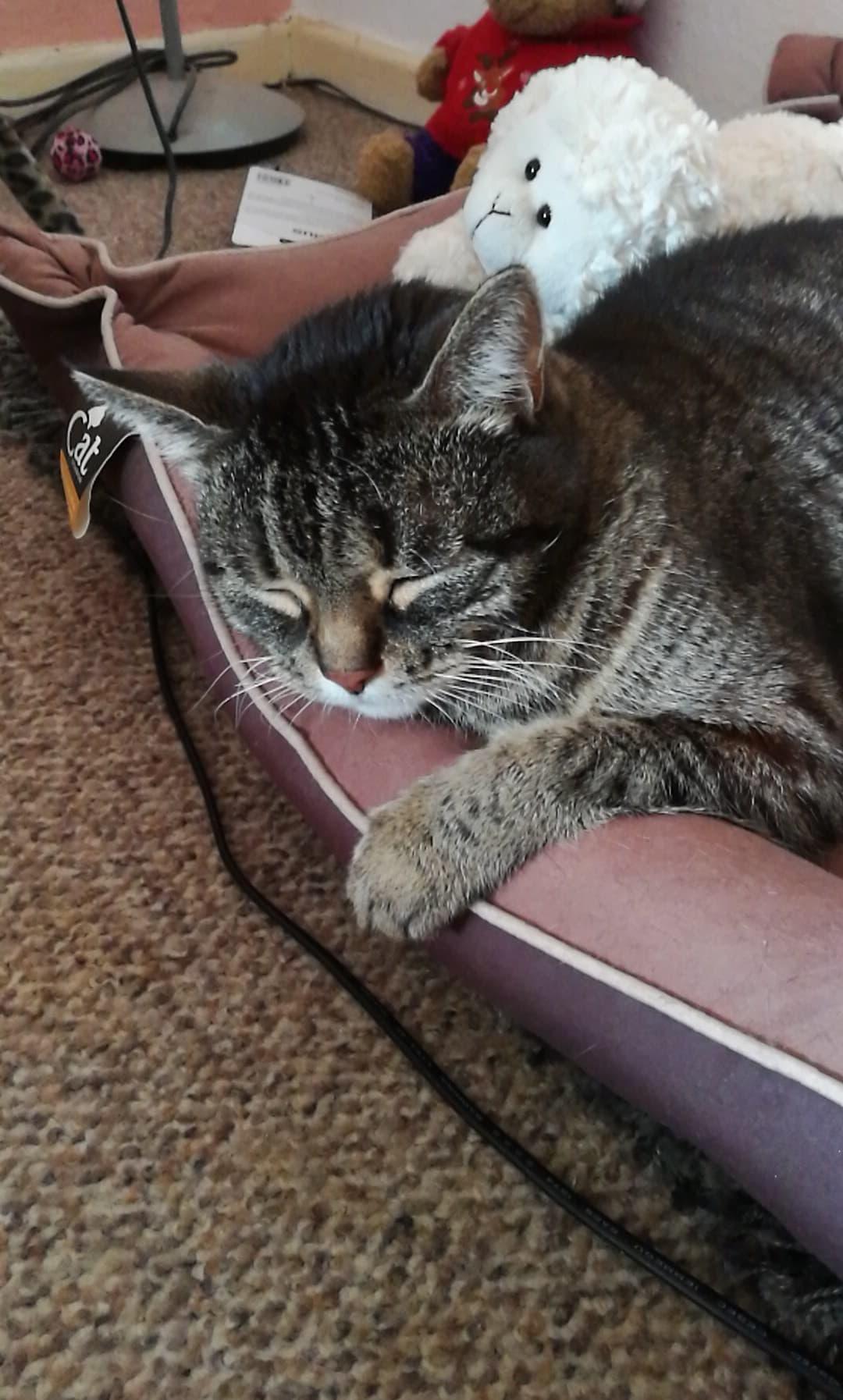 Katzen (Seite 782) - Allmystery