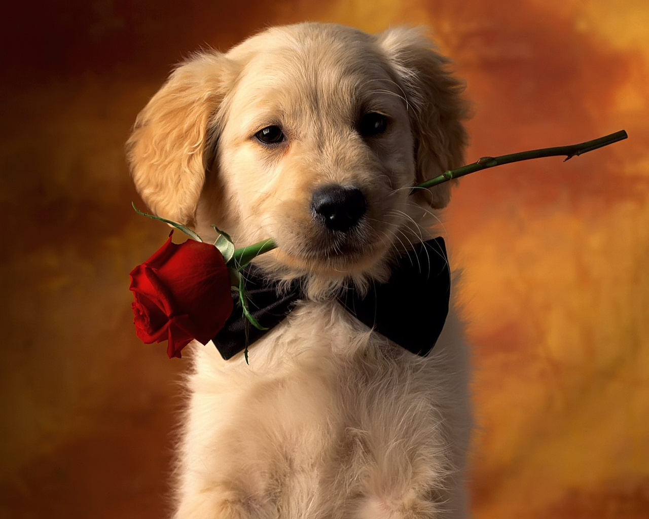 cute dog with rose