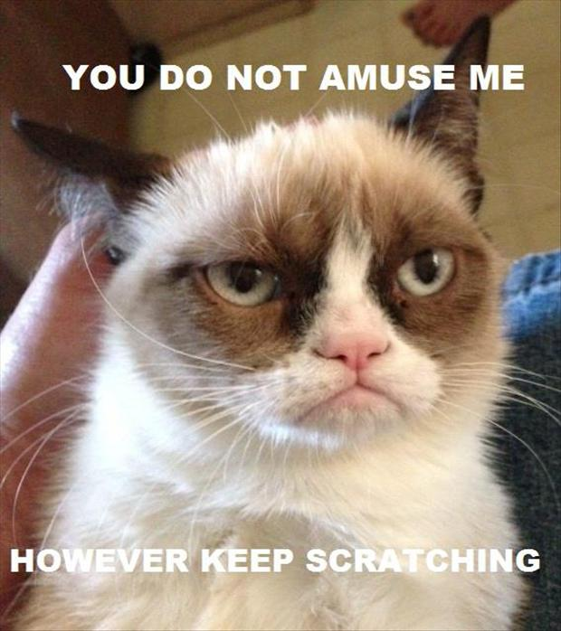 grumpy-cat-is-not-amused