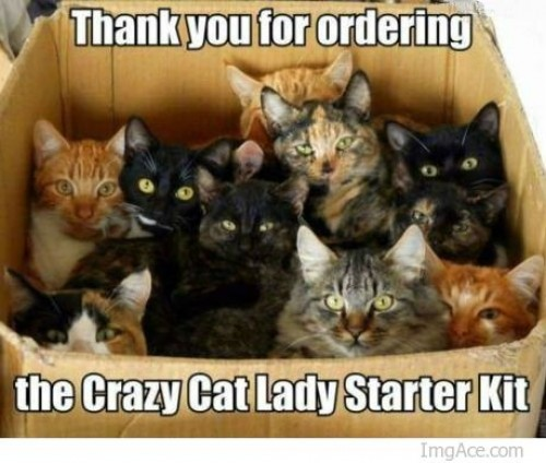 thank-you-for-ordering-the-crazy-cat-lad