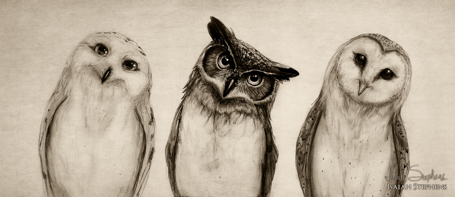 the owls three by isaiahstephens-d6v29am