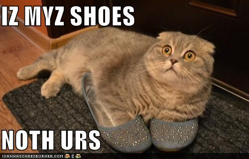 t0HgN61 funny-pictures-iz-myz-shoes-noth-urs