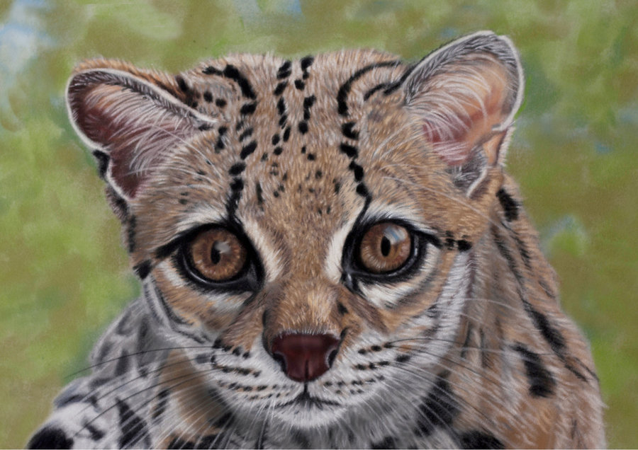 margay pastels by sarahharas07-d67am2q