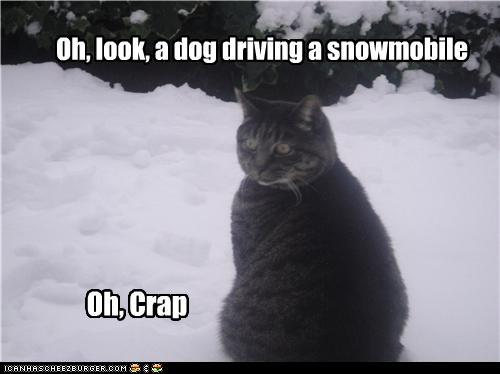 t0mFfyA funny-pictures-oh-look-a-dog-driving-a-s