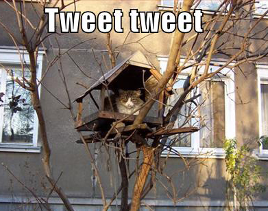 funny-pictures-cat-pretends-to-be-bird