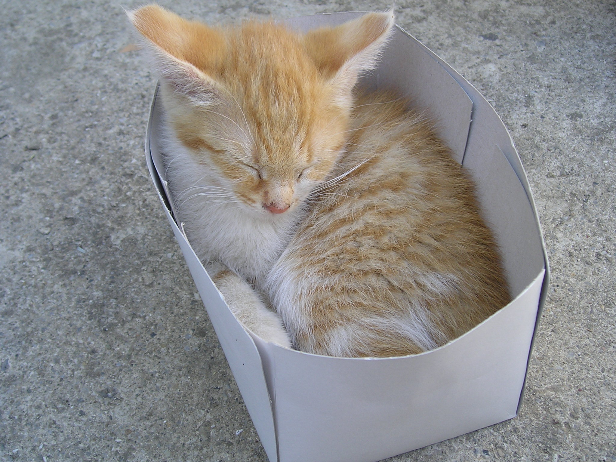 Cat into the box