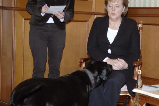 Merkel Hund