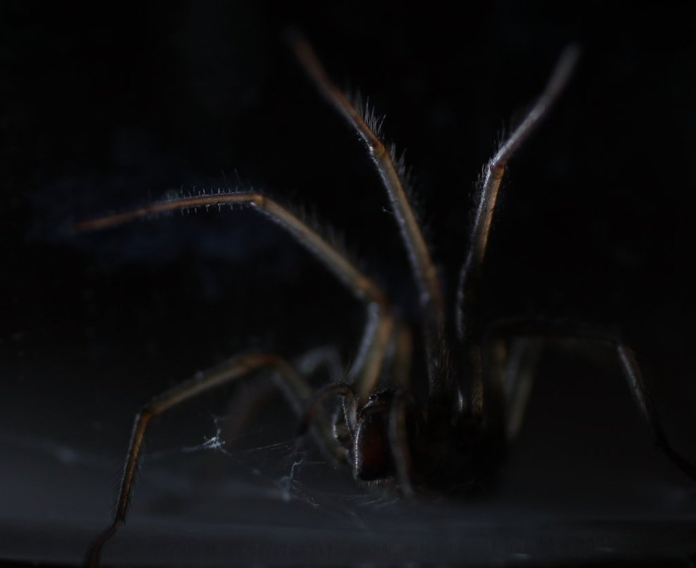 creepy spider by wadyface-d4p5ae9