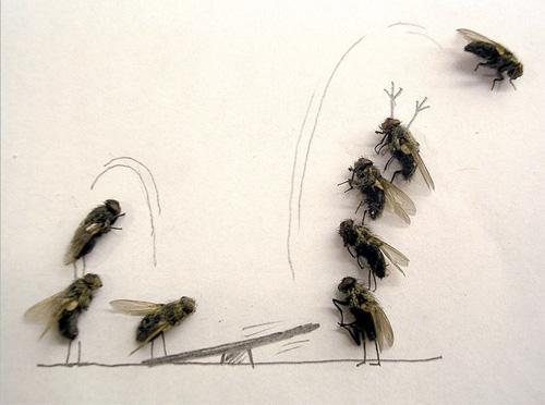fliegen erscheinen aus dem nichts seite 2 allmystery