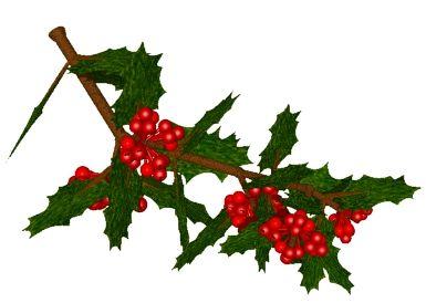 mistelzweig weihnachten