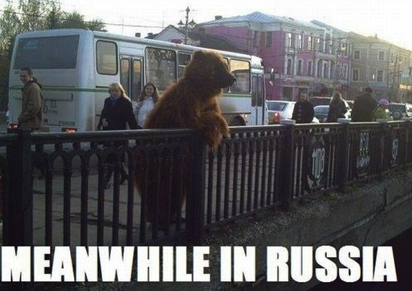 meanwhile-in-russia-bear-on-street