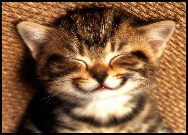 smiling cat small