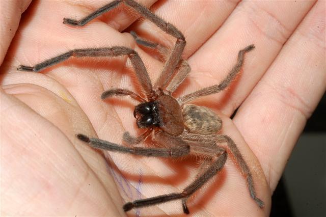 Spin.De Einloggen