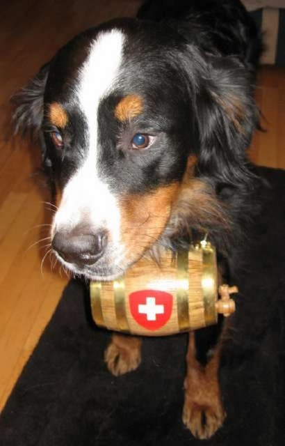 rescue-dog-swiss-cross-whiskey-barrel-41