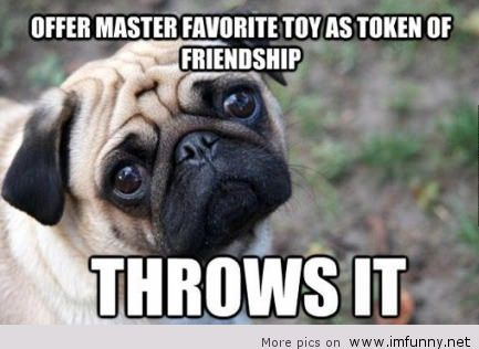 Funny-dog-with-sayings