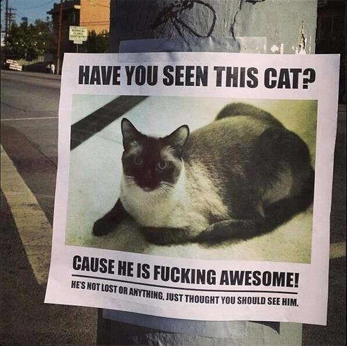 Have-you-seen-this-cat