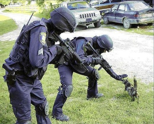 t395TlU 111696 95807721 owned cat swat