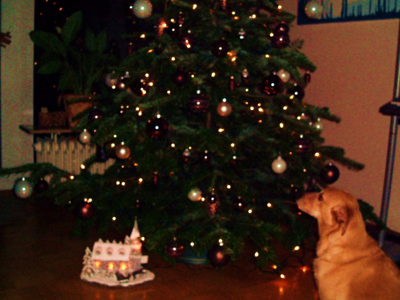 Weihnachtsbaum mit braunen kugeln