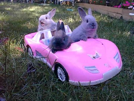bunnies driving