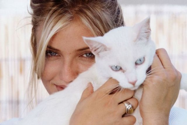 celebrities and cats 28