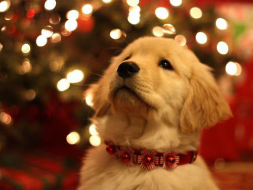 a christmas dogs 4