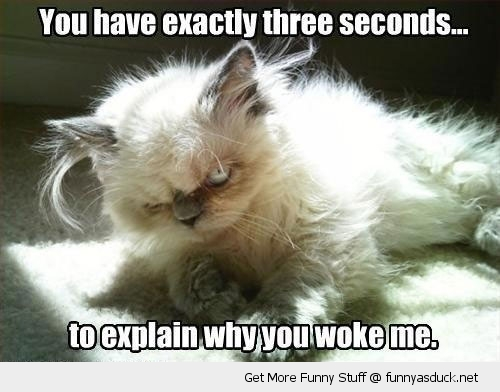 funny-angry-cat-woke-up-kitten-pics
