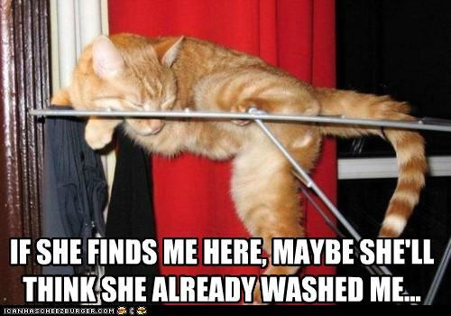 t4z8kCy funny-pictures-if-she-finds-me-here-mayb