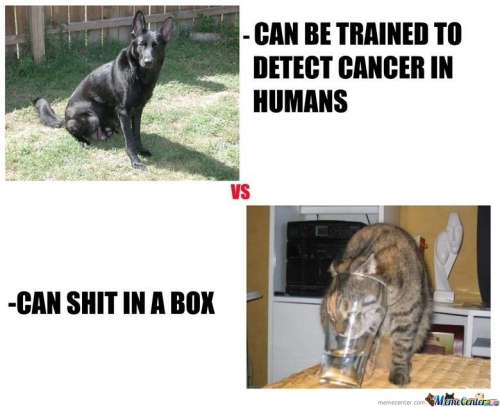 Dogs-Vs-Cats c 109670