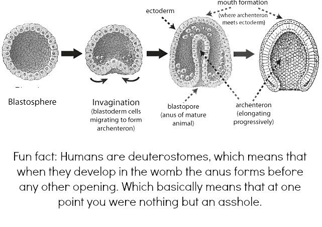 fun-fact-humans-are-deuterostomes