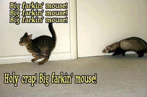 funny-photo-captions-cat-running-from-fe