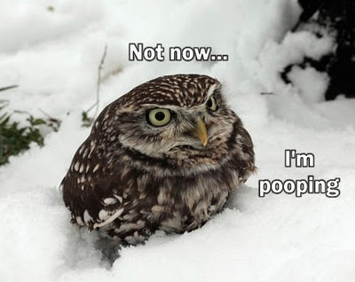 funny-owl-image-08