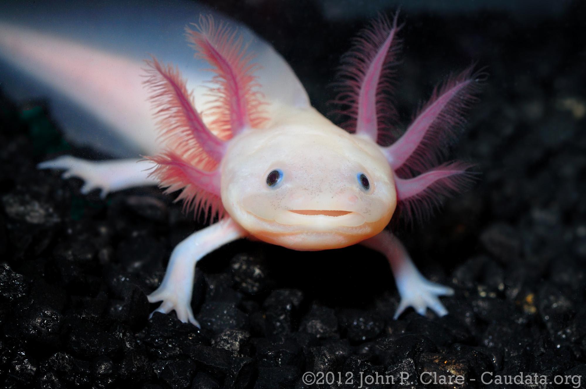 ist der blobfisch das h lichste tier der welt seite 2
