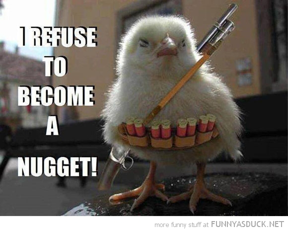 funny-rambo-chicken-refuse-be-nugget-bir