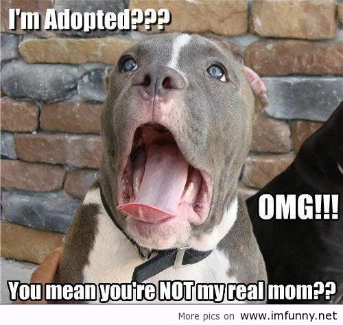 funny-adopted-dog